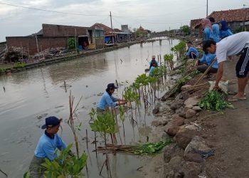Tim KKN posko 46 bersama warga menanam Mangrove di bantaran Sungai